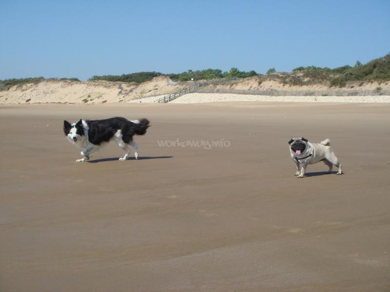 Vendee Beaches Dogs