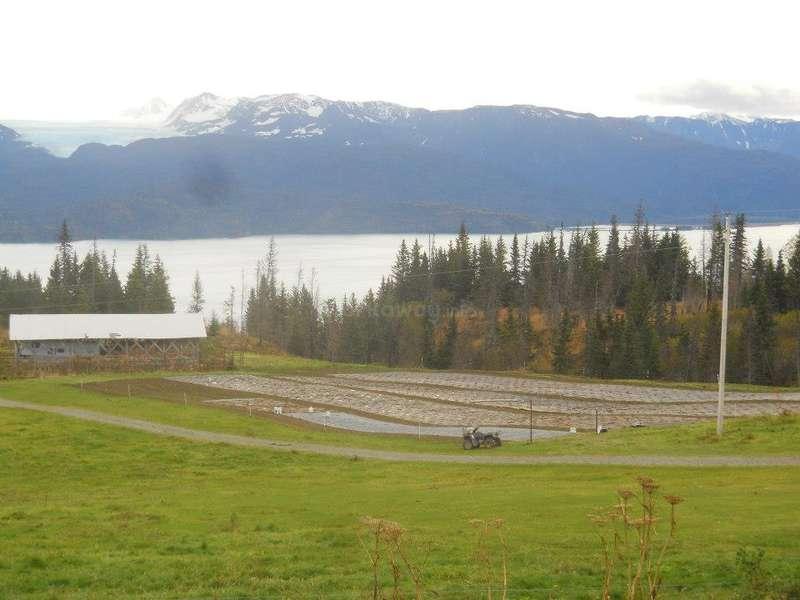 Volunteer to help a beautiful family in their farm in Alaska