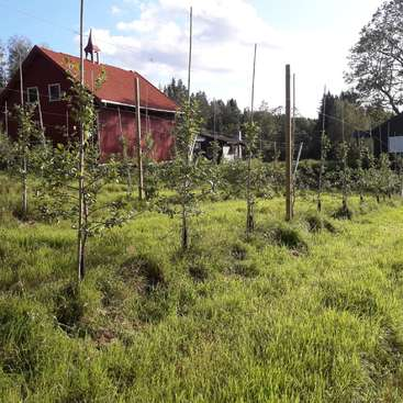 Come To Our Farm And Become Part Of Our Sailing Collective In Norway
