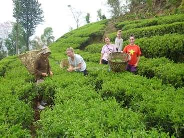 Volunteer in an Organic Tea Farm in Ilam, Nepal