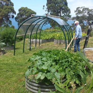 Help Us With The Vegetable Garden, Artisan Preserves And General  Maintenance In Woodbridge, Australia