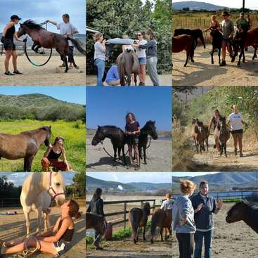 474ab32ac98d Help care and train a critically endangered pony