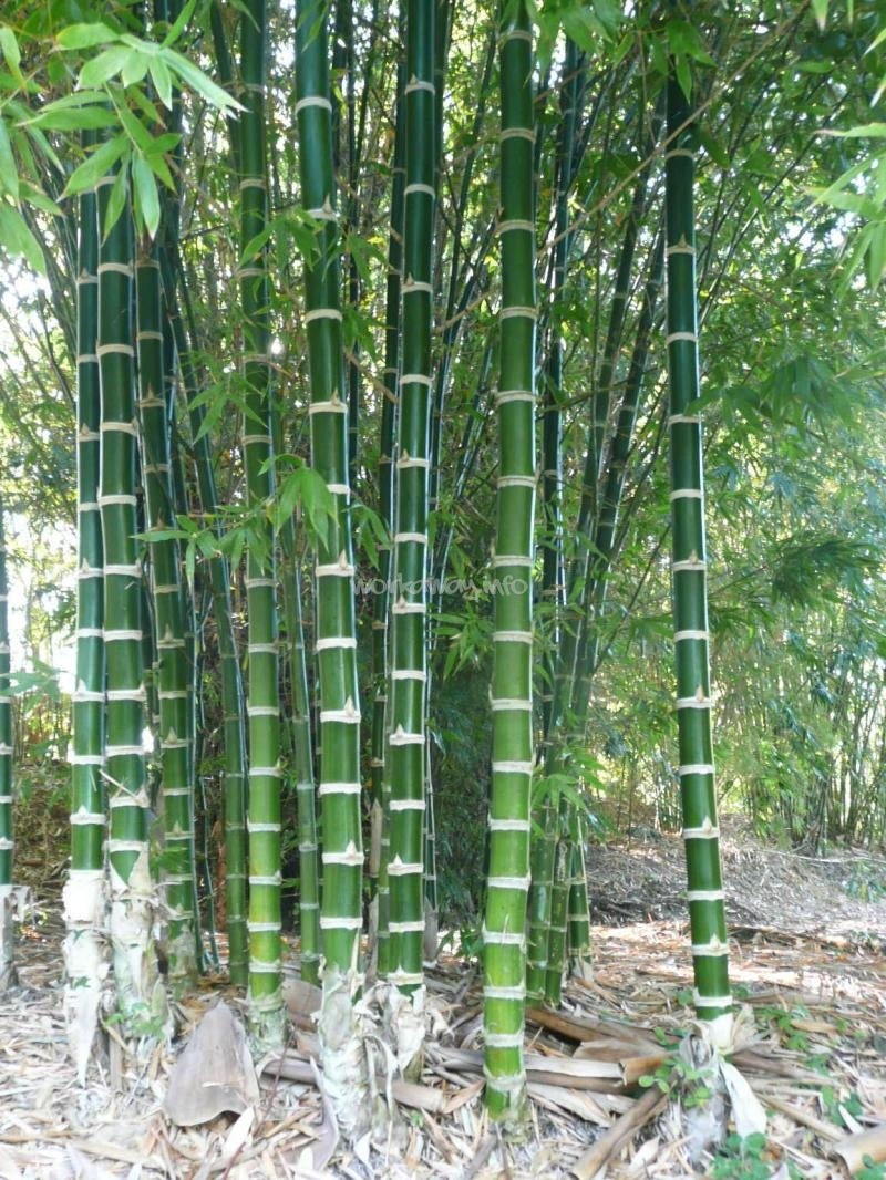 Work In A Tropical Bamboo Garden Queensland
