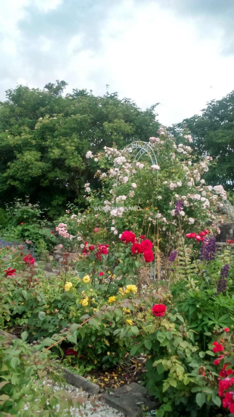 Magnificent Rose Garden Jobs Photos - Landscaping Ideas for Backyard ...