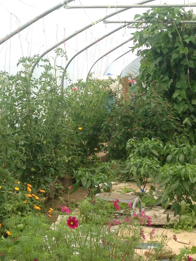 Besoin d'aide pour du jardinage et de la construction dans