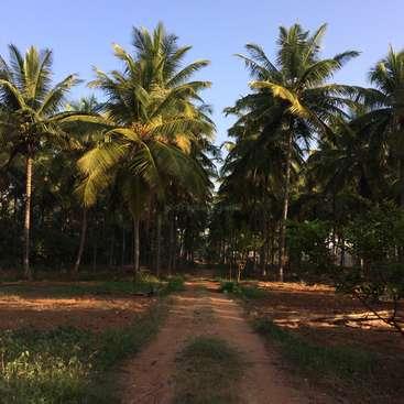 Carte De Linde Mysore.Help On A Small Organic Coconut Farm Near Mysore India