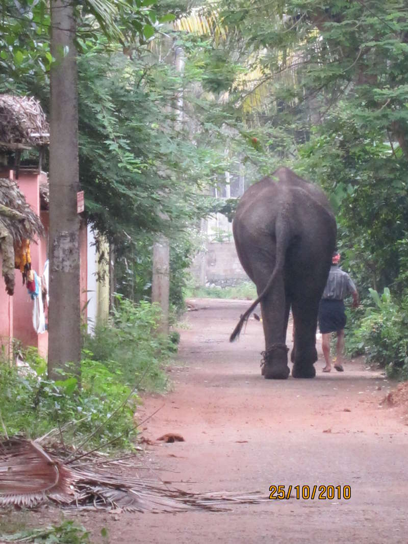Elephant En Inde Signification help with landscaping, farming, reception, recycling and