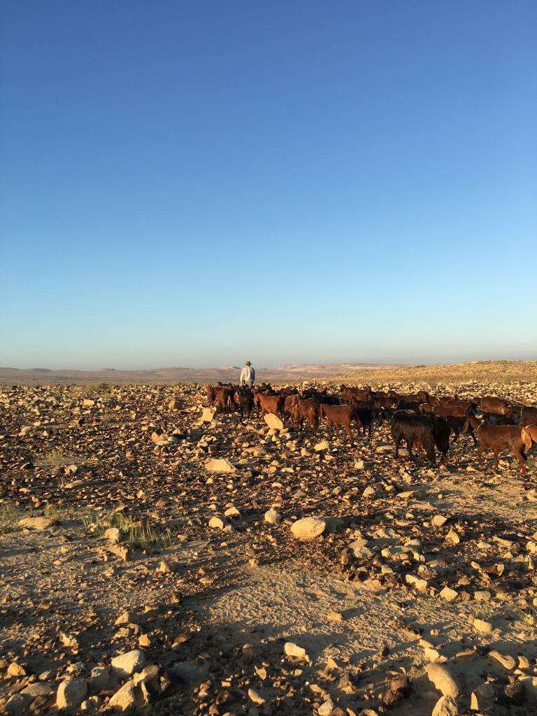 Come help on a small goat farm in the Negev Desert, Israel