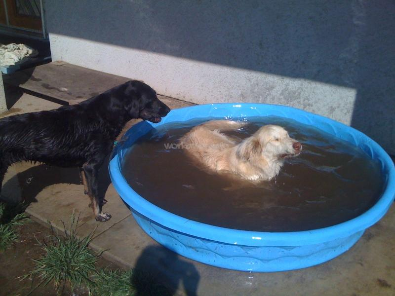 Walk with me help with animal care and retreat space in the sometimes the dogs prefer the kiddie pool in the front yard solutioingenieria Choice Image