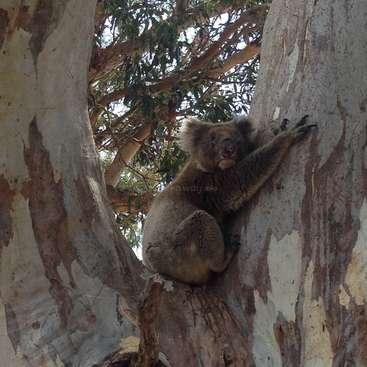 Help Create A Bushland Sanctuary On Beautiful Kangaroo Island South