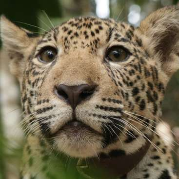Volunteer In The Jungle At Rurrenabaque At Our Wildlife Rescue Center Bolivia