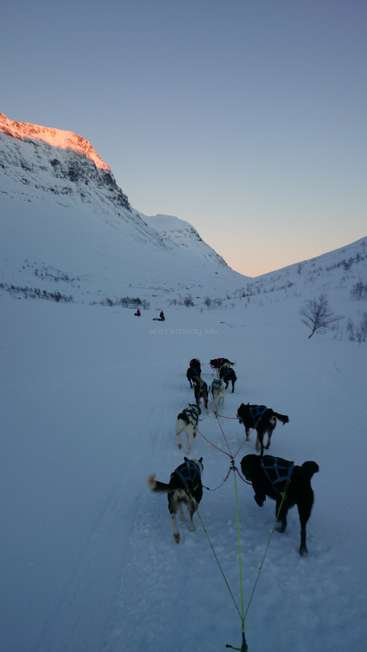 Looking for help in wilderness camp and huskey kennel in Norway