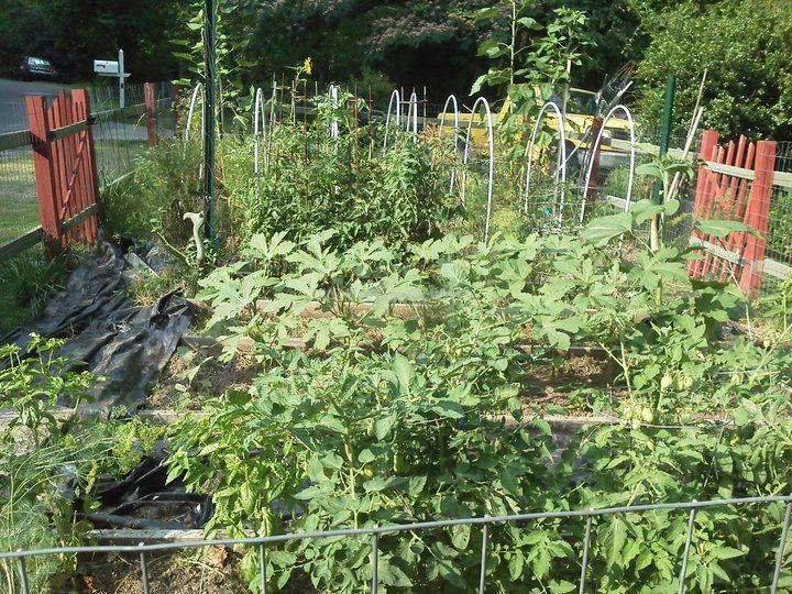 Ayurvedic Farm In North Carolina Looking For Help With The
