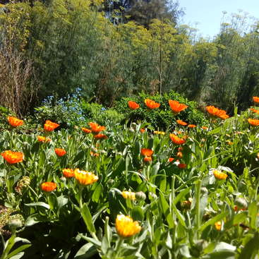 Learn about edible flowers, bioconstruction, nature and more on our