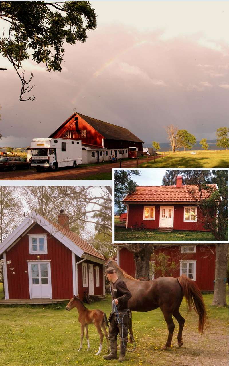 Come And Help Out On A Horse Farm In The Historical Viking Island In Visingso Sweden