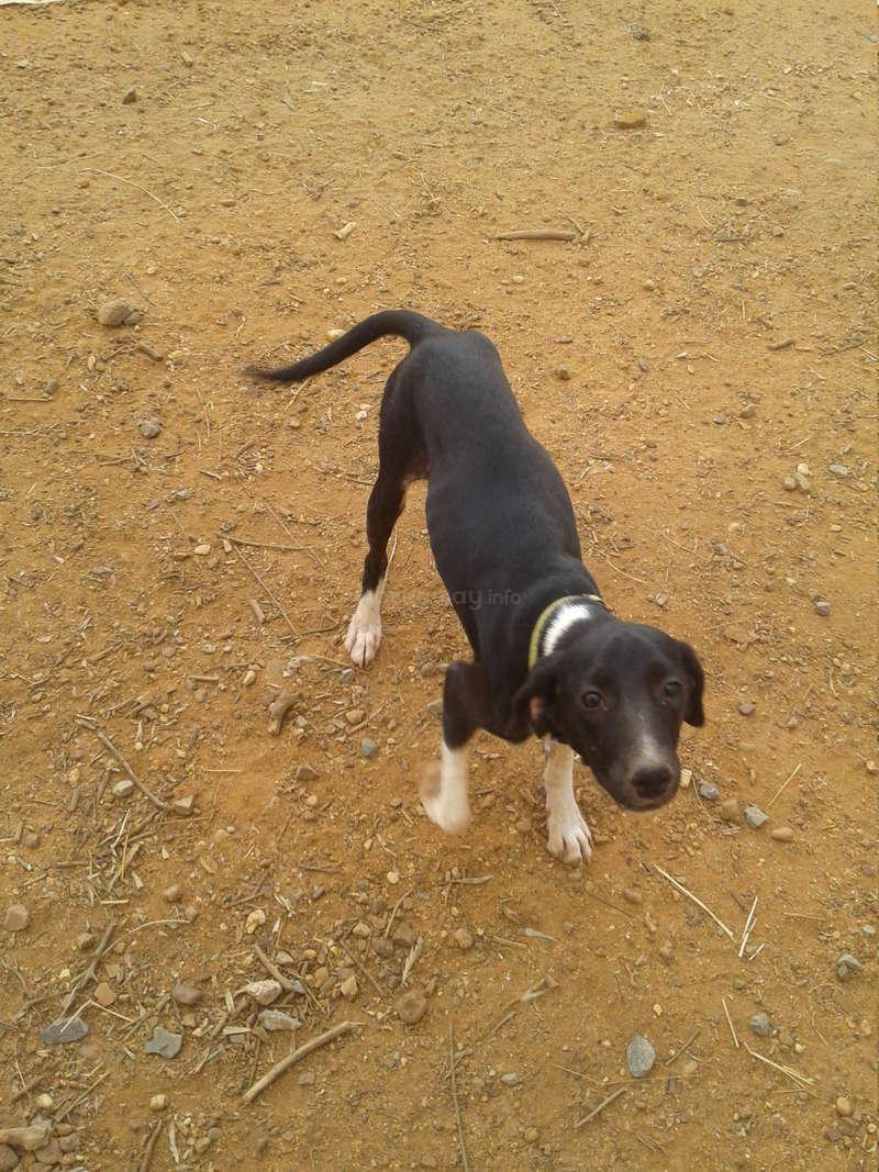 Need volunteers to help running an animal welfare shelter