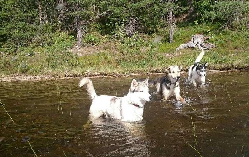 Where Can You Take Dog At Byron Bay