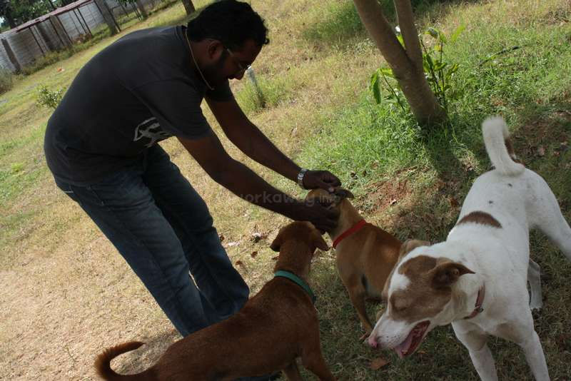 Help around the centre and with outreach programs for an animal