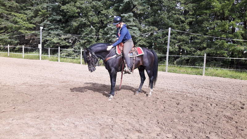 Volunteer at an Equestrian Horse & Guest Ranch Facility in Alberta
