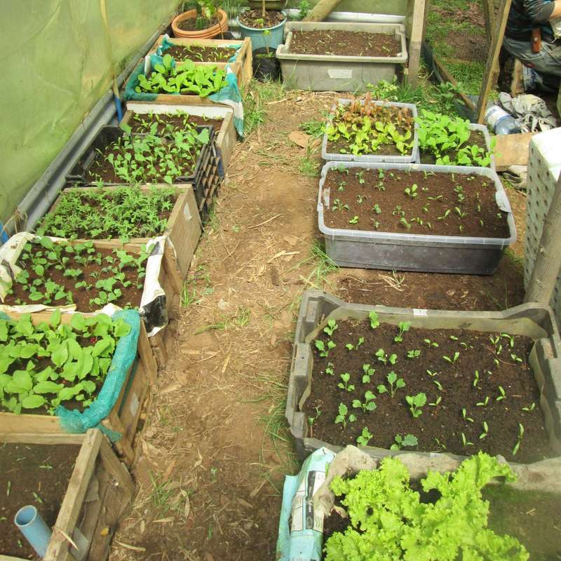 Exceptionnel Come And Join Us, Living Off Grid And Practicing Permaculture In A Patch Of  Second Growth Valdivian Rainforest