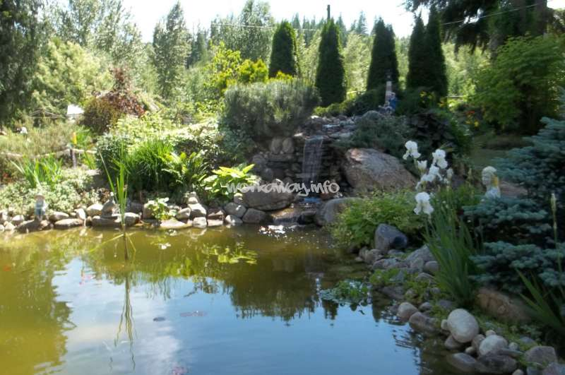 Help at our home in the north okanagan shuswap region of for Koi pond kelowna