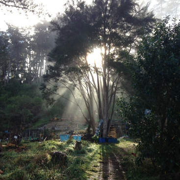 Permaculture lovers and helpers wanted join my self sustainable permaculture lovers and helpers wanted join my self sustainable project in the gisborne region new zealand solutioingenieria Image collections