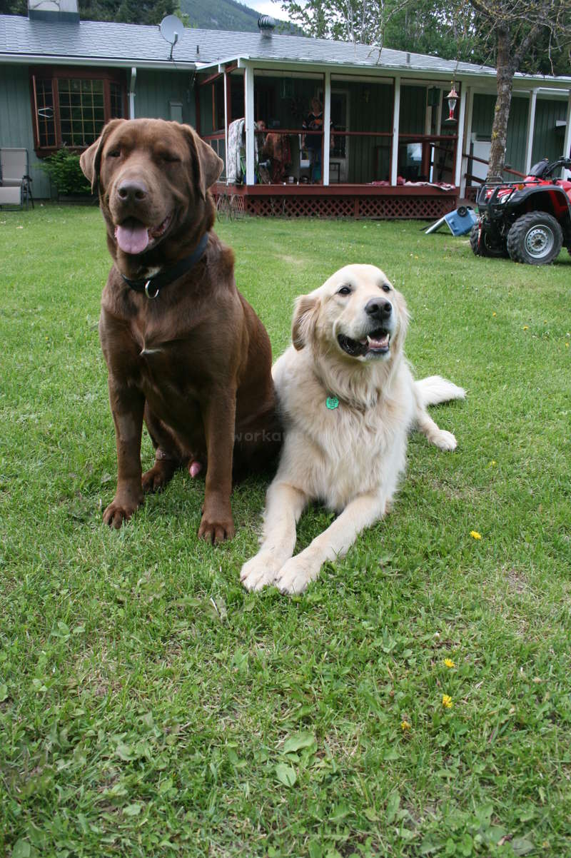 Help us at our family home and Horse rescue in Salmon Arm