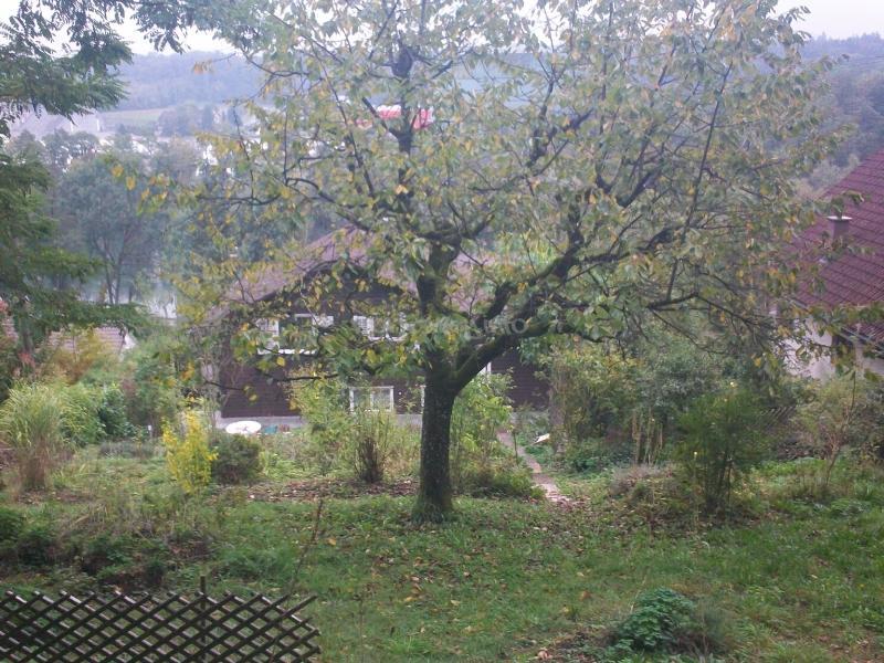 help me with my overgrown garden in auenstein. Black Bedroom Furniture Sets. Home Design Ideas
