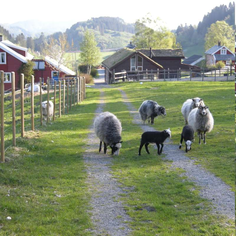 Come And Help On A Small Farm Near Bergen, Norway