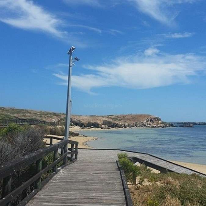 Penguin Island Western Australia Australien