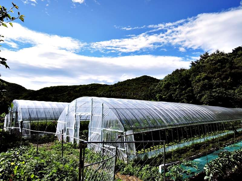 Learn about organic farming in a small organic farm in the