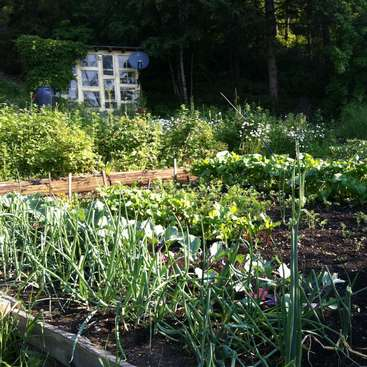 Building a Permaculture HEMP Farm & Homestead, Rocky Mountains of BC