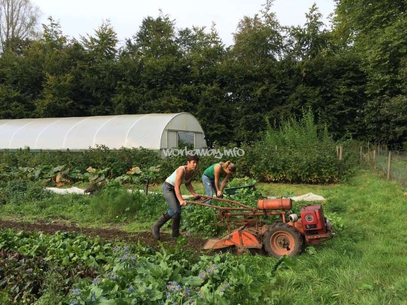 Amazing Learn About Market Gardening And Help Us With Our Local Community Project  Here In Henley, UK