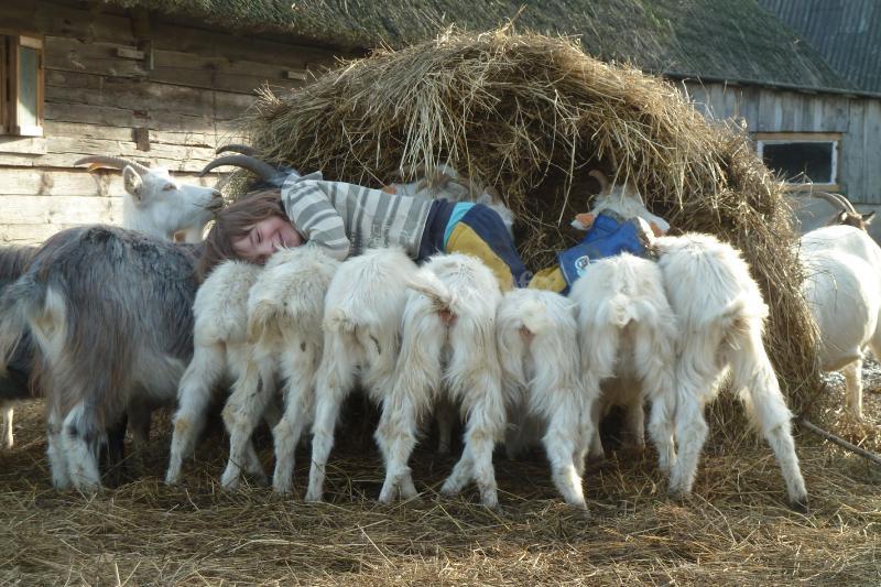 Help On An Organic Goat Farm And Cheesery Near Riga