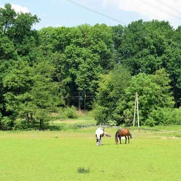 Help Out On A Family Run Farm Located In The North Rhine Westphalia Germany