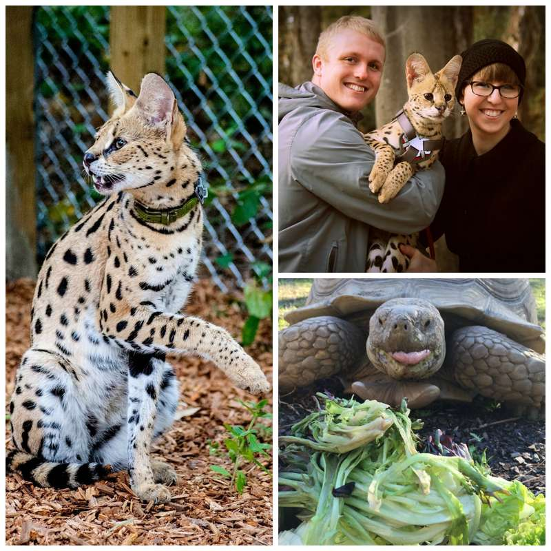 exotic animals as pets According to the 2007-2008 national pet owners survey, about 63 percent of all households in america, or about 711 millions homes, have at least one pet, including cats, dogs, birds, fish.