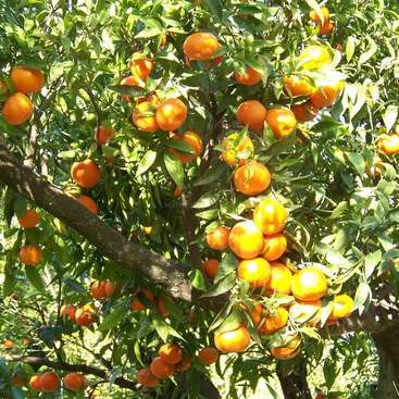 Discover Tunisian way of life at our orange farm, cat and