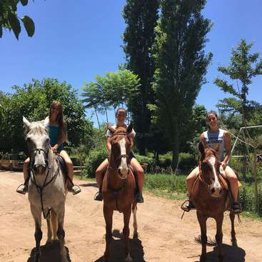 Have fun helping with our horses, foals and the garden on a