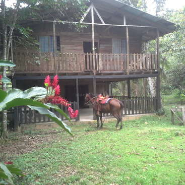 Help at a horse ranch in Carbon, Cahuita, Costa Rica