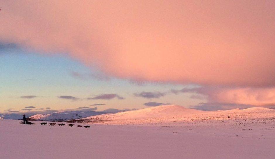 dogsledding across snow during sunset