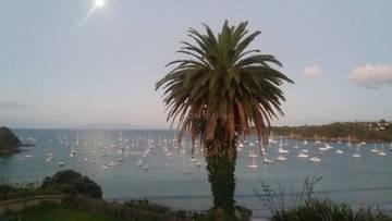moored sailboats