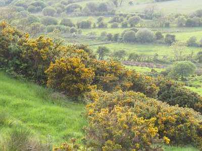 Donegal_161