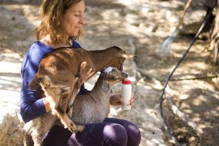 slow travel farm cycling goat