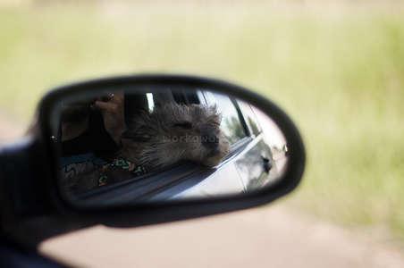 roadtrip dog travel adventure pet