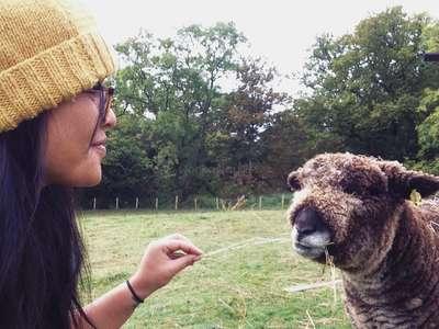 farm life workawayer feeding sheel