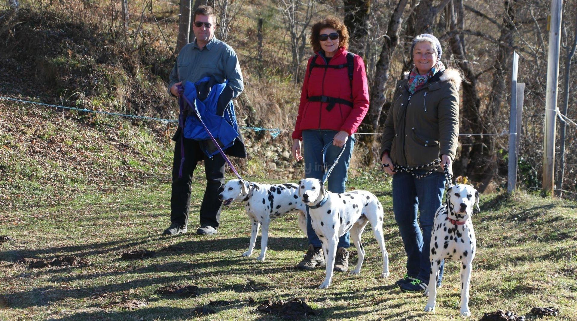 workawayers dog walking in france