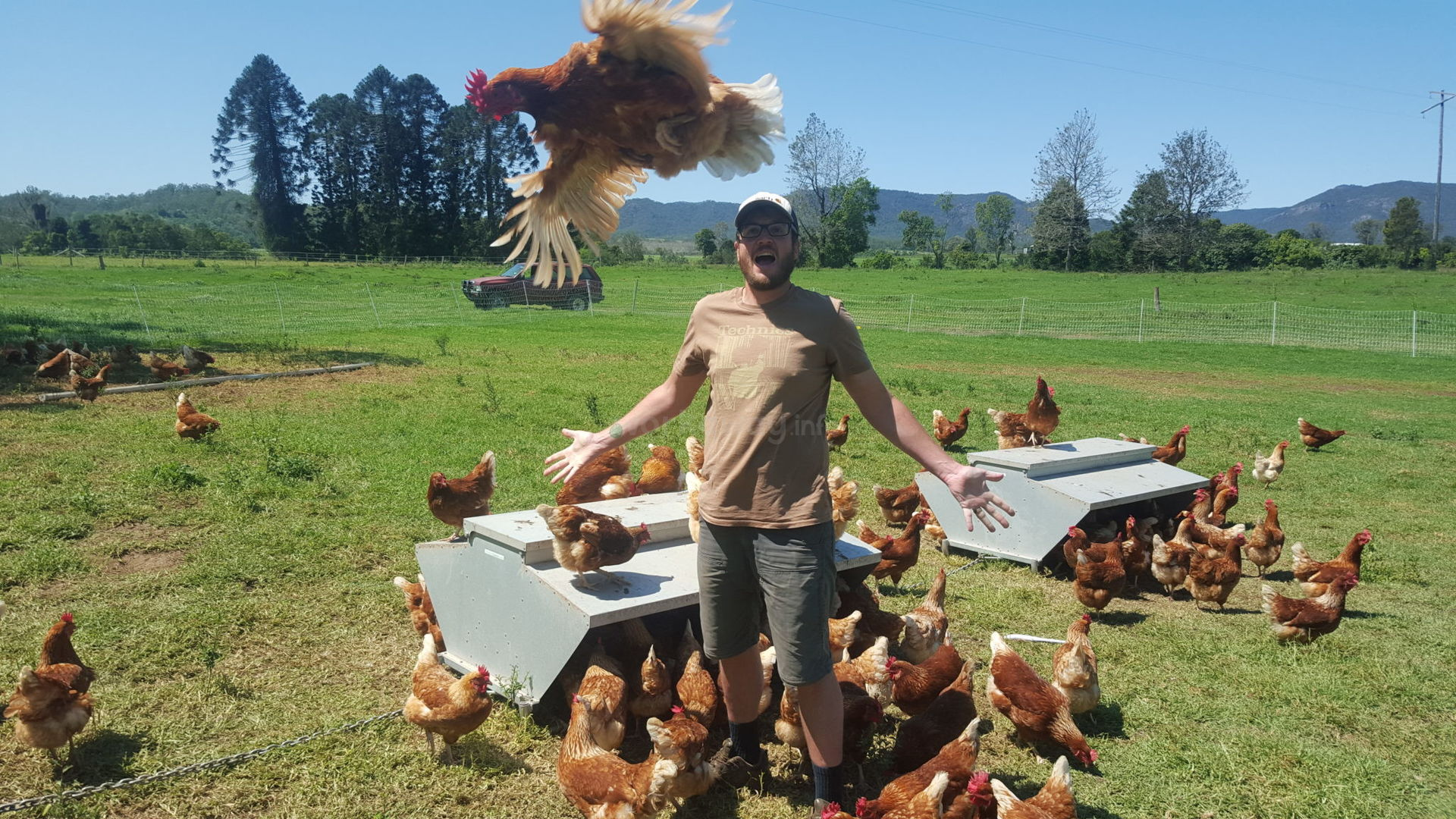 workawayer with chickens