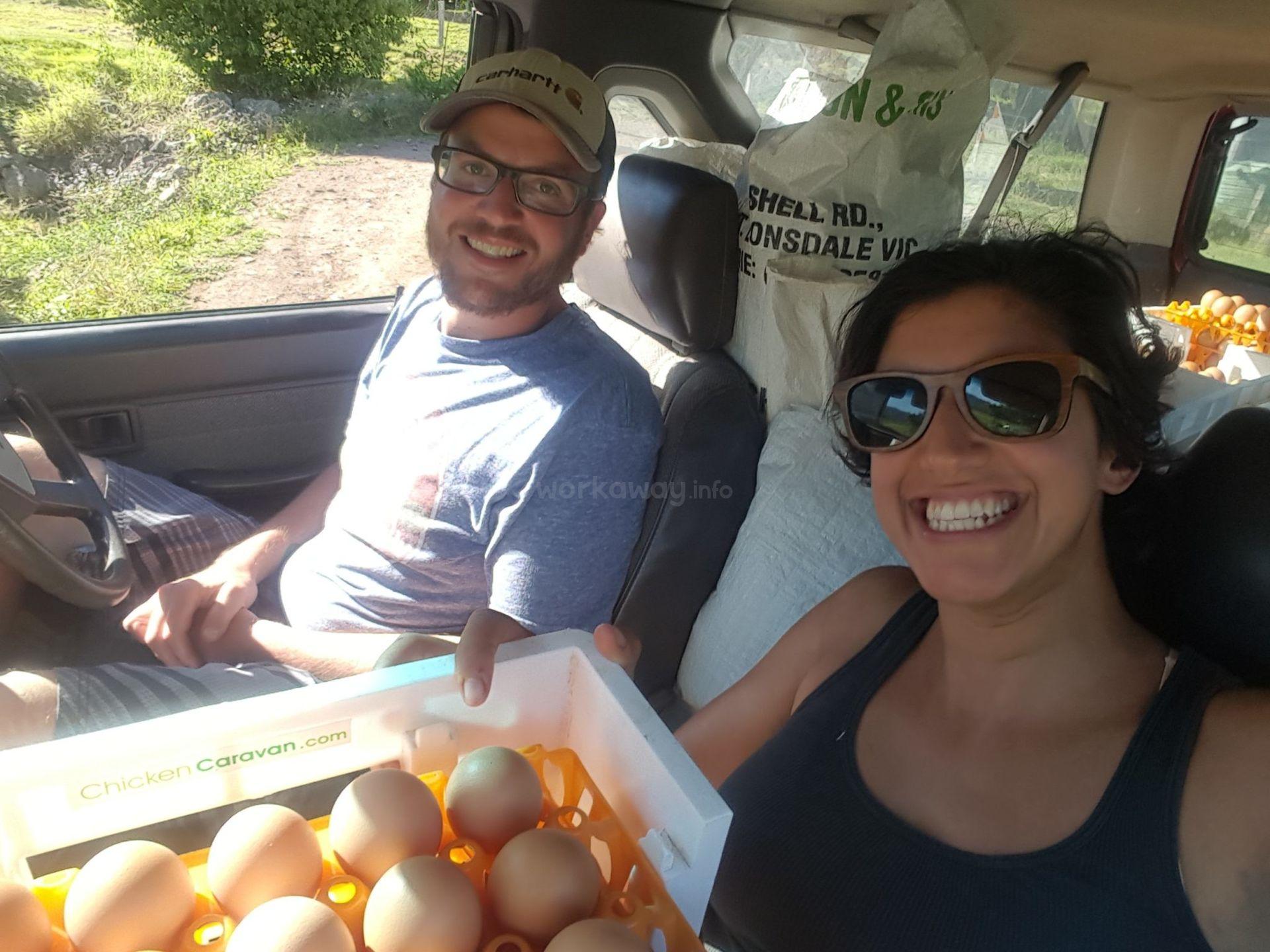 workawayers with eggs in van