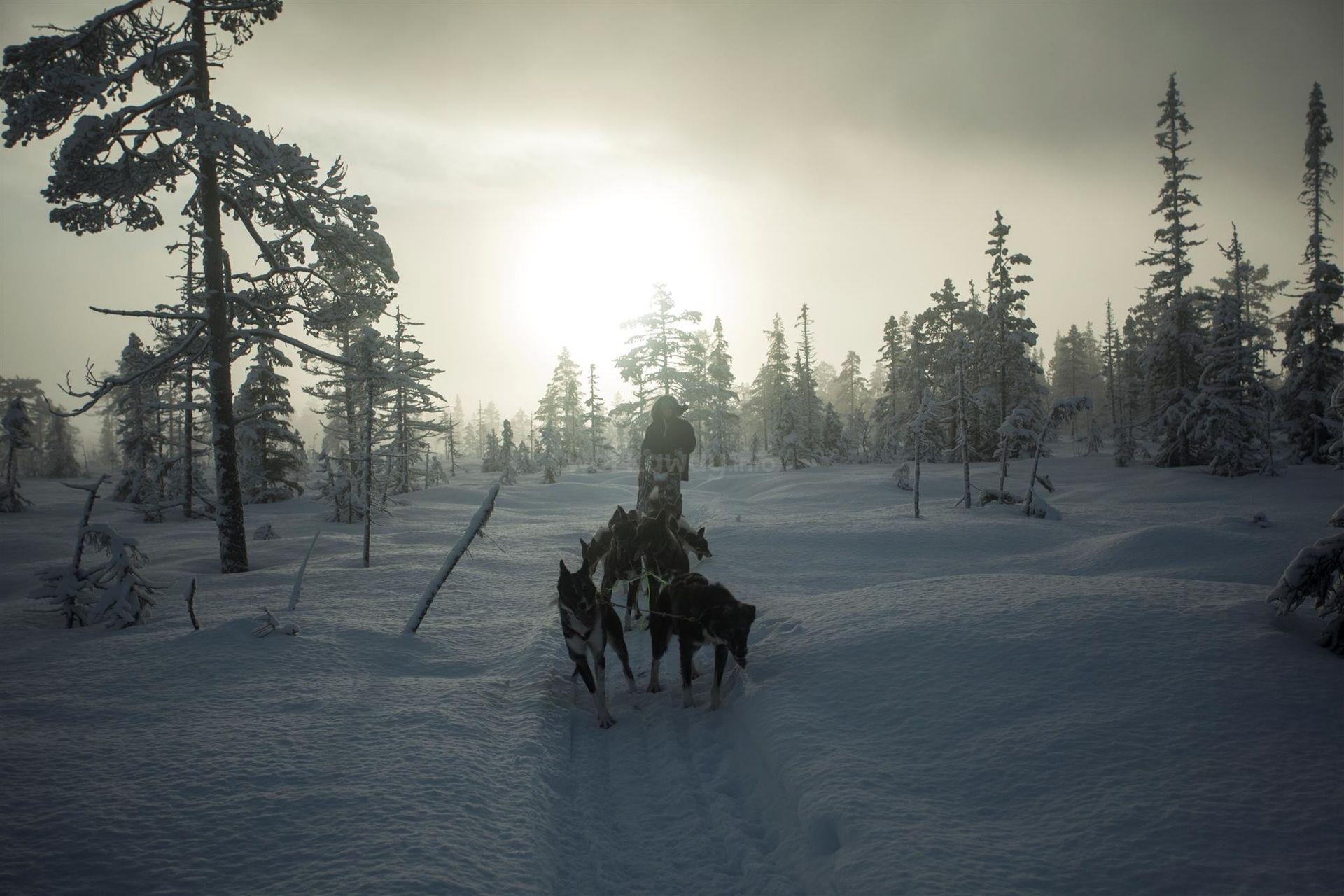 dogsledding in the snow