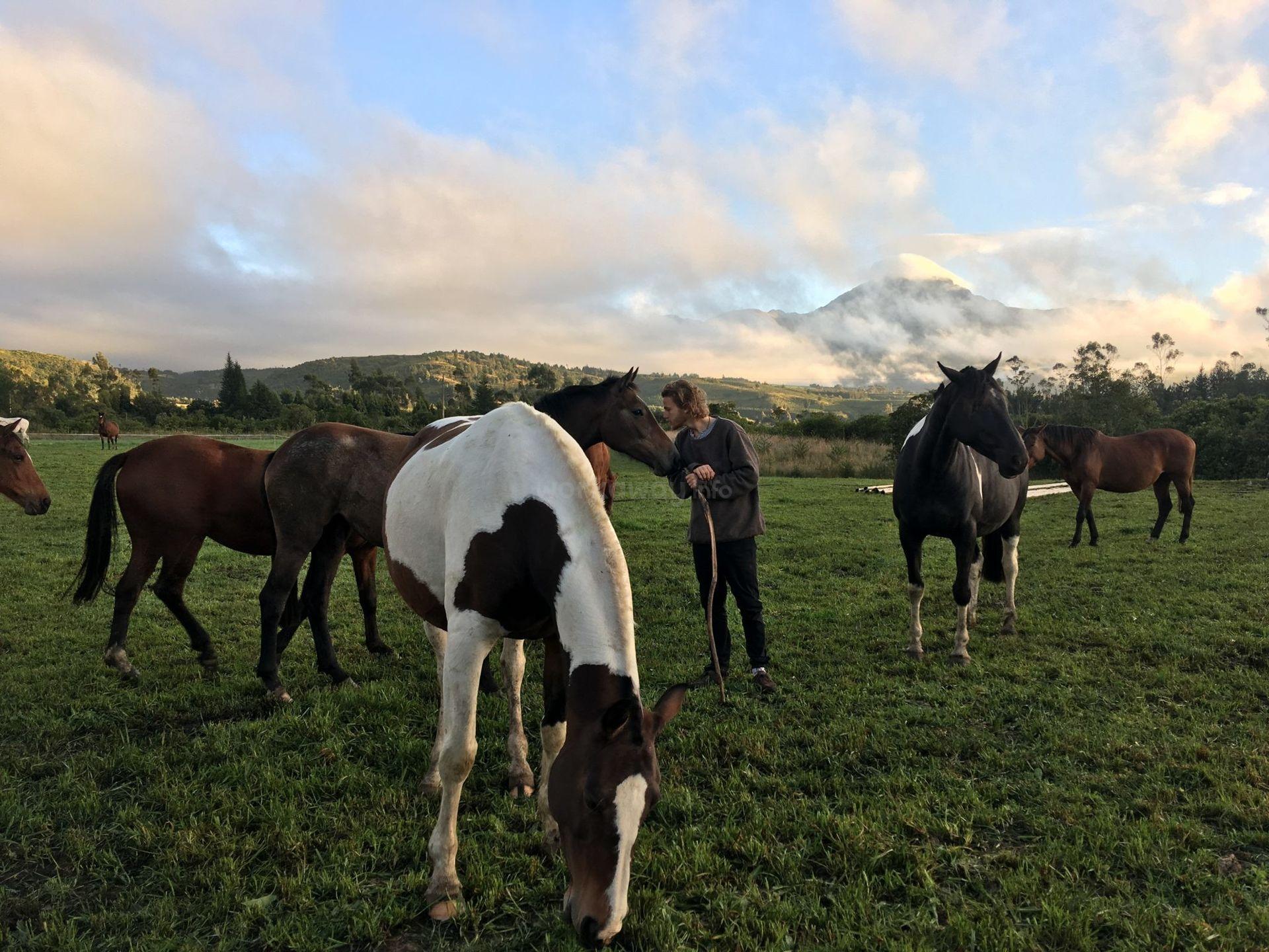 grazing ranch volunteer farm outdoor